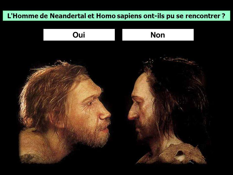 Homo sapiens (lhomme moderne) serait apparu en Afrique il y environ 200 000 ans (Théorie: Out of Africa). Des Homo sapiens vivaient au Moyen-Orient il