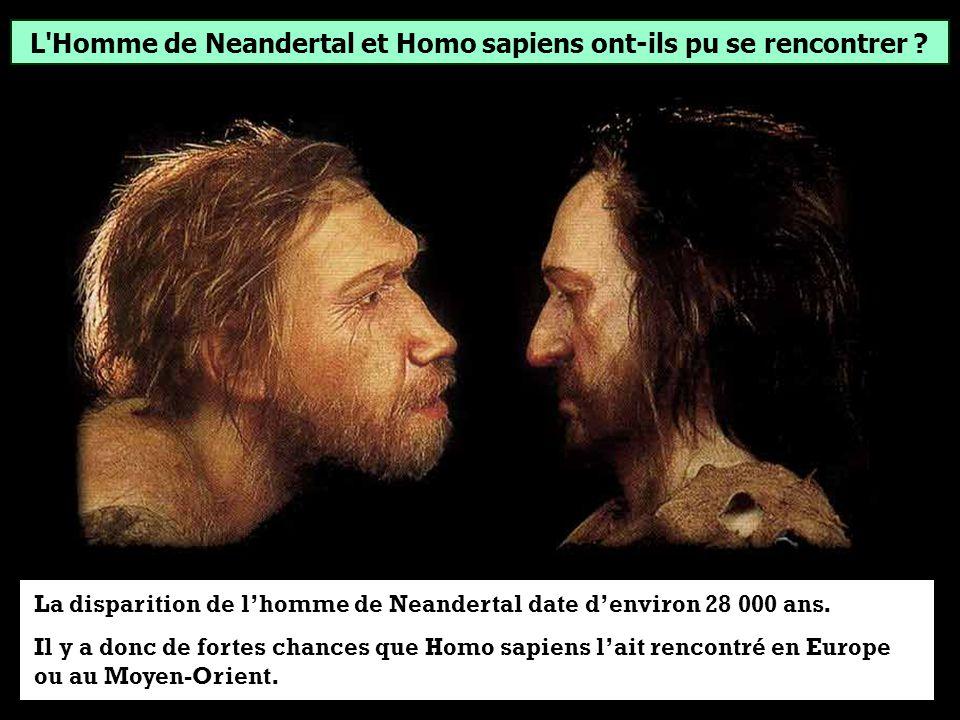 L'Homme de Neandertal et Homo sapiens ont-ils pu se rencontrer ? OuiNon