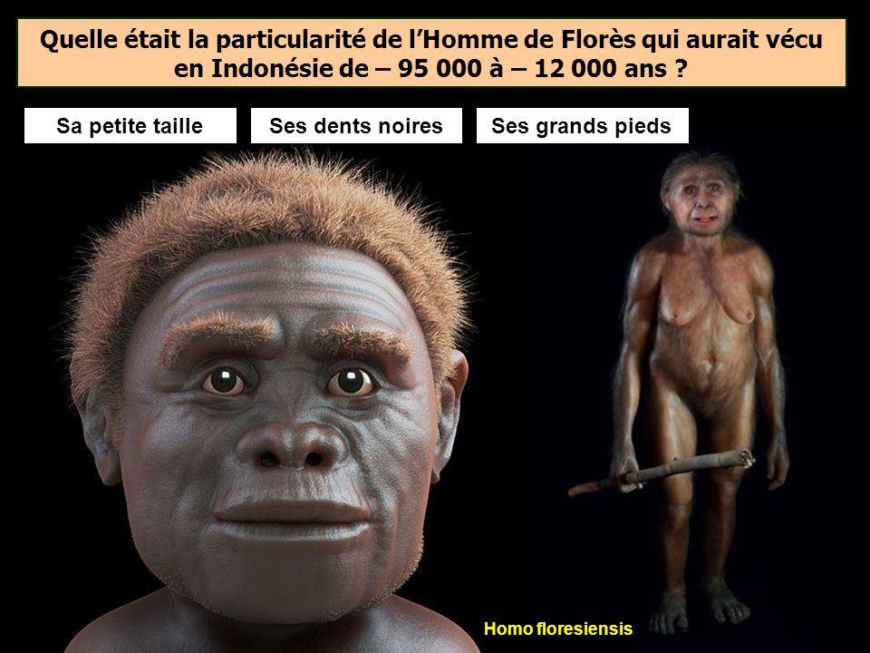 Les premières sépultures prouvées sont datées de 100 000 ans et se trouvent dans l'actuel Israël. Elles sont dues à Homo sapiens. En Europe, lhomme de