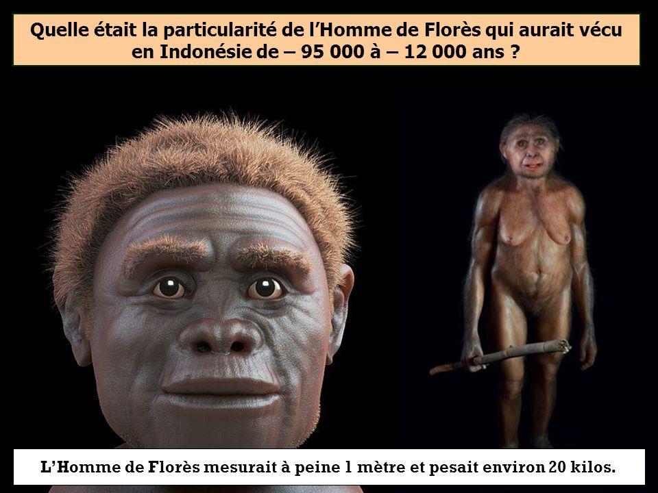 Quelle était la particularité de lHomme de Florès qui aurait vécu en Indonésie de – 95 000 à – 12 000 ans ? Sa petite tailleSes dents noiresSes grands
