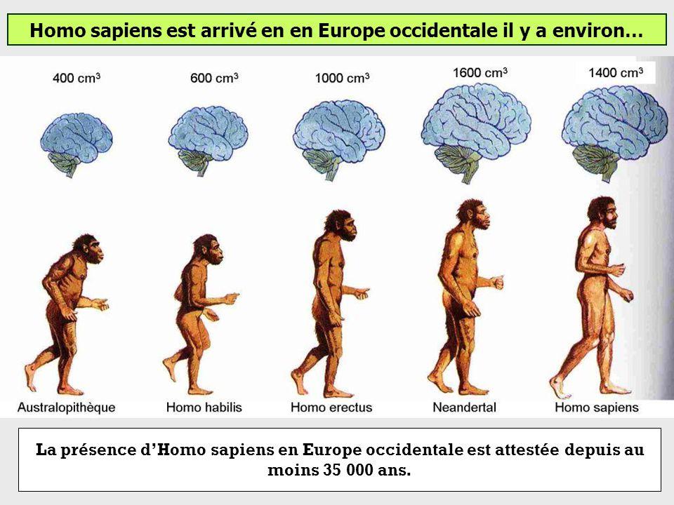 Homo sapiens est arrivé en en Europe occidentale il y a environ… 35 000 ans65 000 ans95 000 ans 250 000 ans à 28 0000 ans 200 000 ans à aujourdhui 7 M