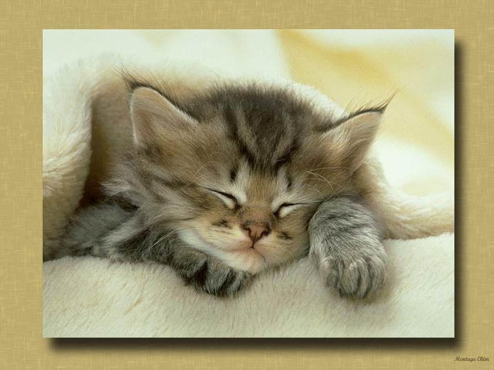 Les gens savent apprécier cette manifestation daffection du chat qui ronronne. On sait aussi que le ronron fait baisser la tension et a un effet calma