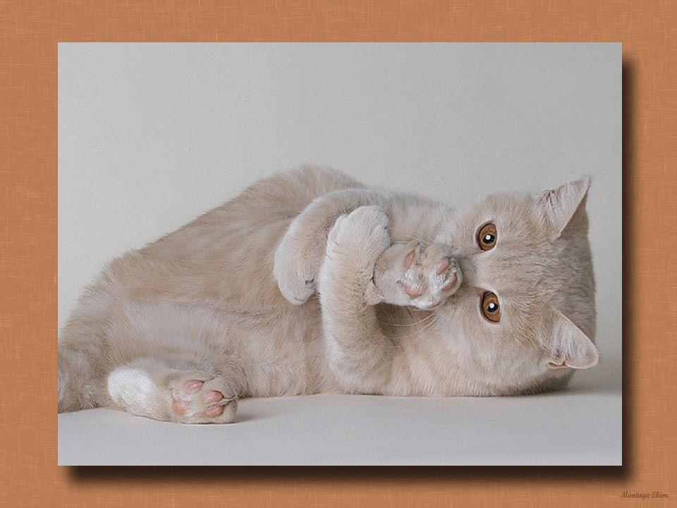 De plus, le pouvoir thérapeutique du chat en zoothérapie est reconnu depuis fort longtemps. Il aide à améliorer ou à maintenir la santé des jeunes ou
