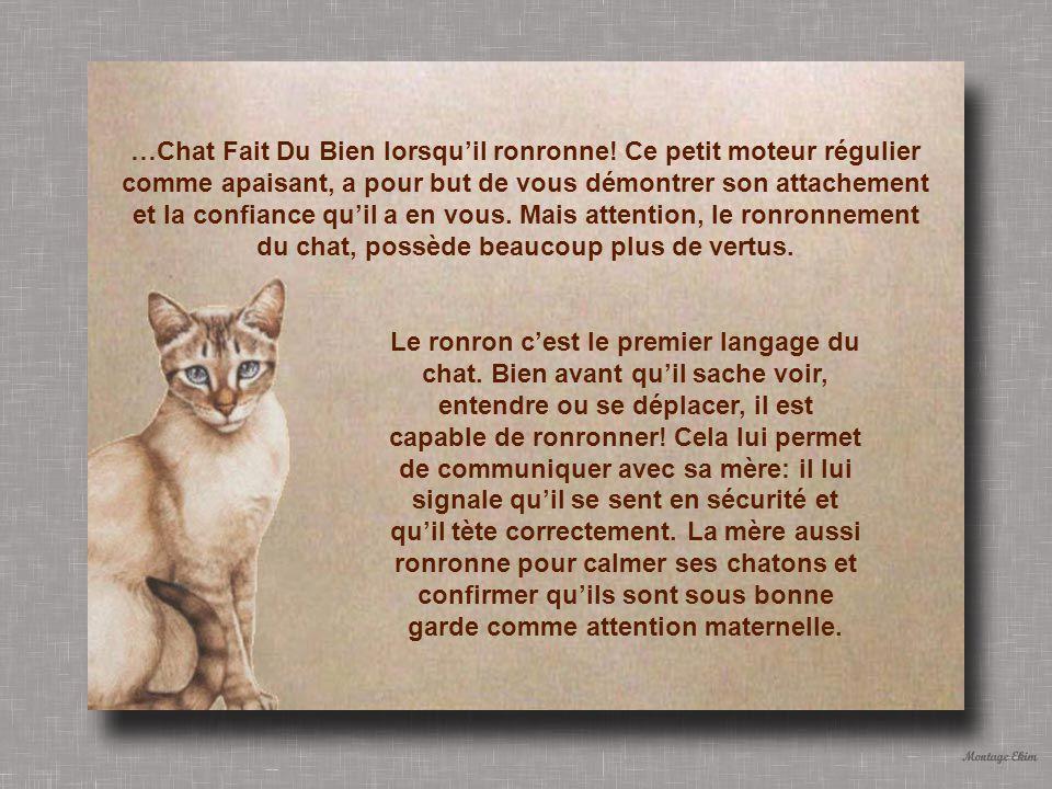 …Chat Fait Du Bien lorsquil ronronne.