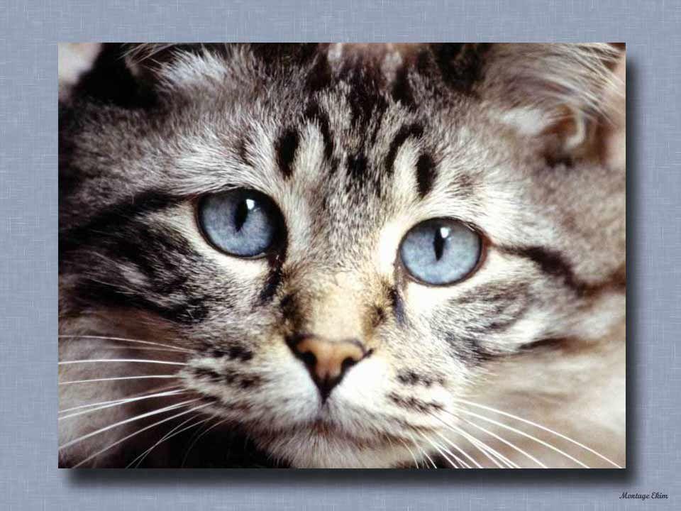 Les gens savent apprécier cette manifestation daffection du chat qui ronronne.