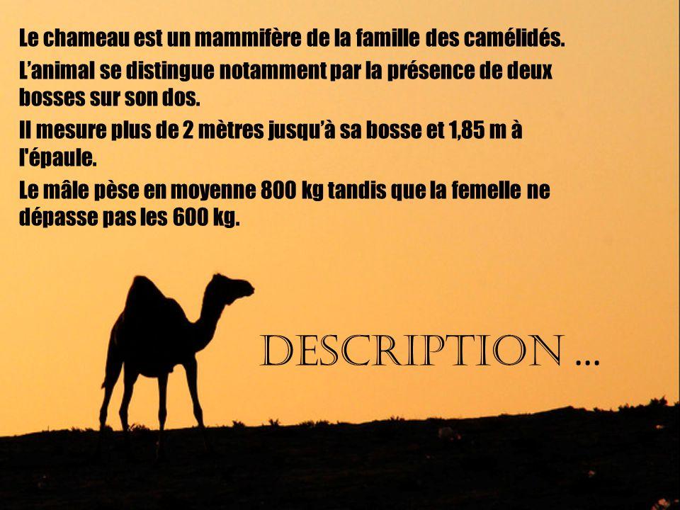 Habitat Le chameau est plutôt utilisé en Asie centrale, en Asie mineure et en Afrique, cest le dromadaire qui le remplace.