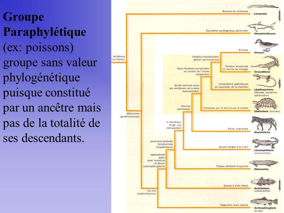 Groupe Paraphylétique (ex: poissons) groupe sans valeur phylogénétique puisque constitué par un ancêtre mais pas de la totalité de ses descendants.