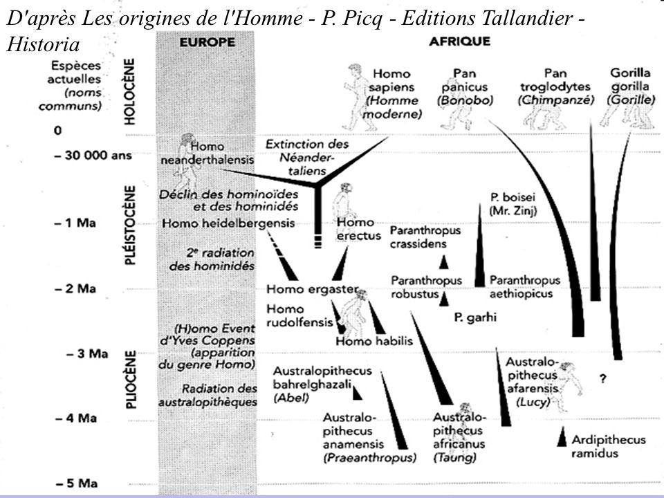 D'après Les origines de l'Homme - P. Picq - Editions Tallandier - Historia