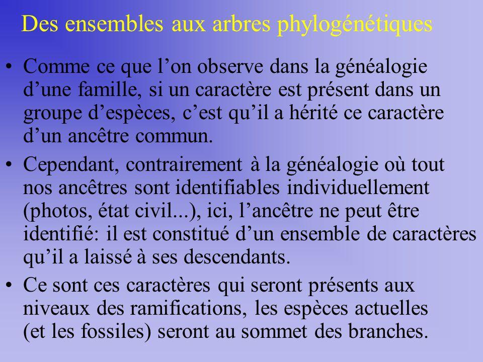Des ensembles aux arbres phylogénétiques Comme ce que lon observe dans la généalogie dune famille, si un caractère est présent dans un groupe despèces