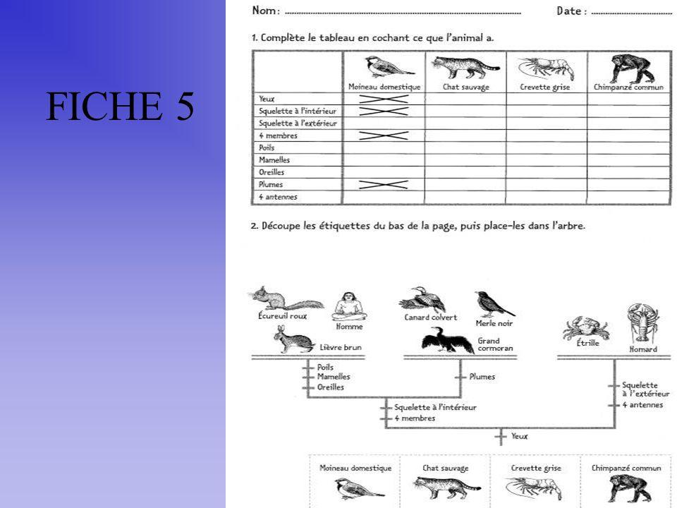 FICHE 5