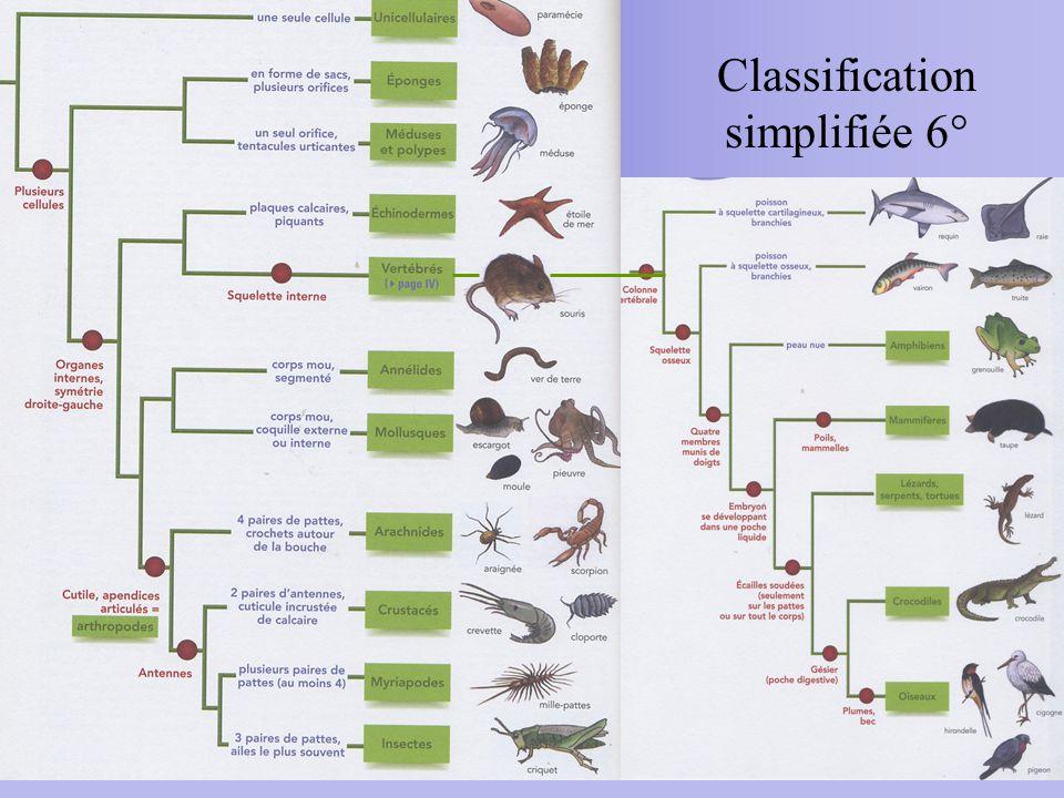 Classification simplifiée 6°