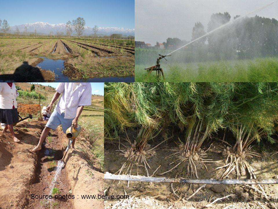 source : www.befve.com Une irrigation maîtrisée va permettre alternativement dinitier le départ de nouvelles pousses den assurer la croissance végétative et doptimiser le système racinaire Le rendement est proportionnel à la masse radiculaire (www.befve.com)