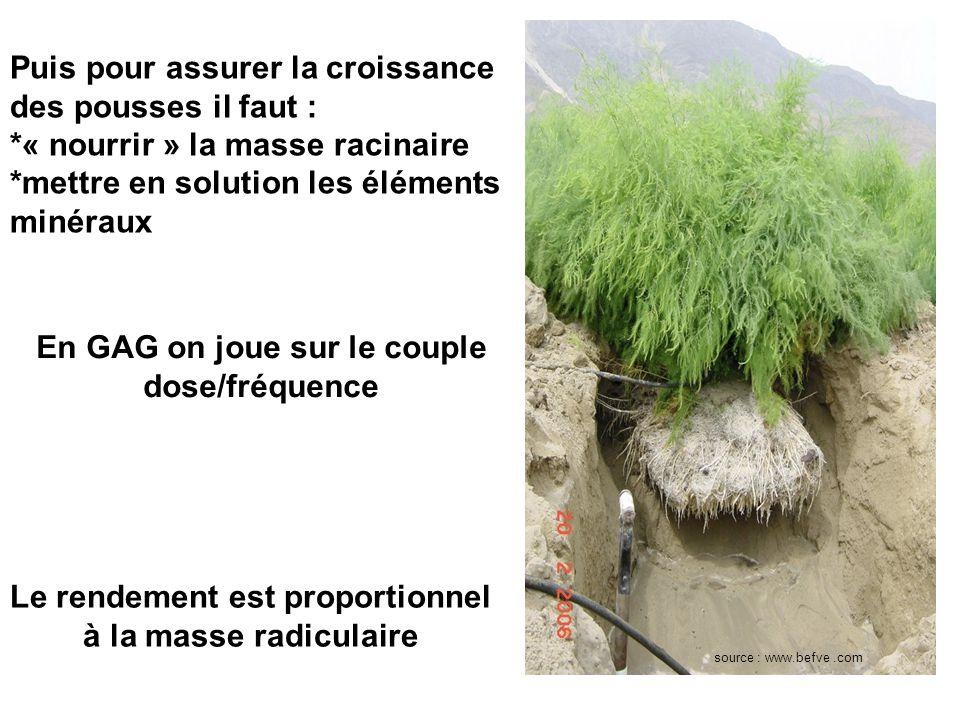 source : www.befve.com La pérennité dune aspergeraie est liée à une bonne oxygénation du sous sol 3 ème étage du pilotage Le but est dexplorer le plus de sol possible