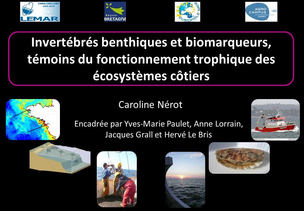Invertébrés benthiques et biomarqueurs, témoins du fonctionnement trophique des écosystèmes côtiers Caroline Nérot Encadrée par Yves-Marie Paulet, Ann