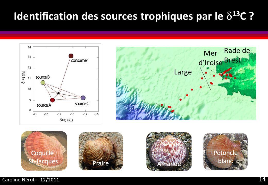 Caroline Nérot – 12/2011 14 Identification des sources trophiques par le 13 C ? Praire Amande Pétoncle blanc Coquille St-Jacques Rade de Brest Mer dIr
