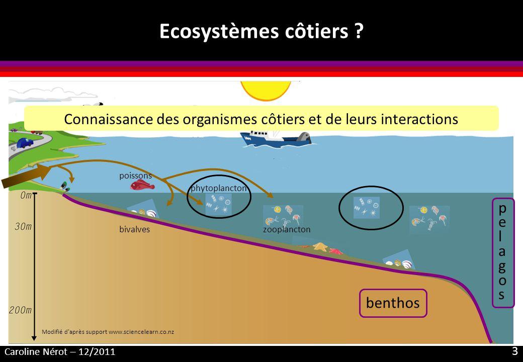 Caroline Nérot – 12/2011 3 Ecosystèmes côtiers ? benthos bivalves phytoplancton zooplancton poissons pelagospelagos Connaissance des organismes côtier