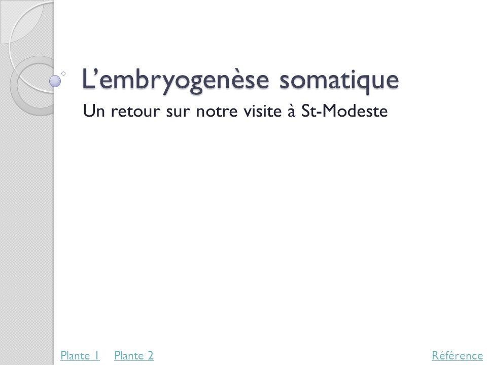 Lembryogenèse somatique Un retour sur notre visite à St-Modeste RéférencePlante 1Plante 2