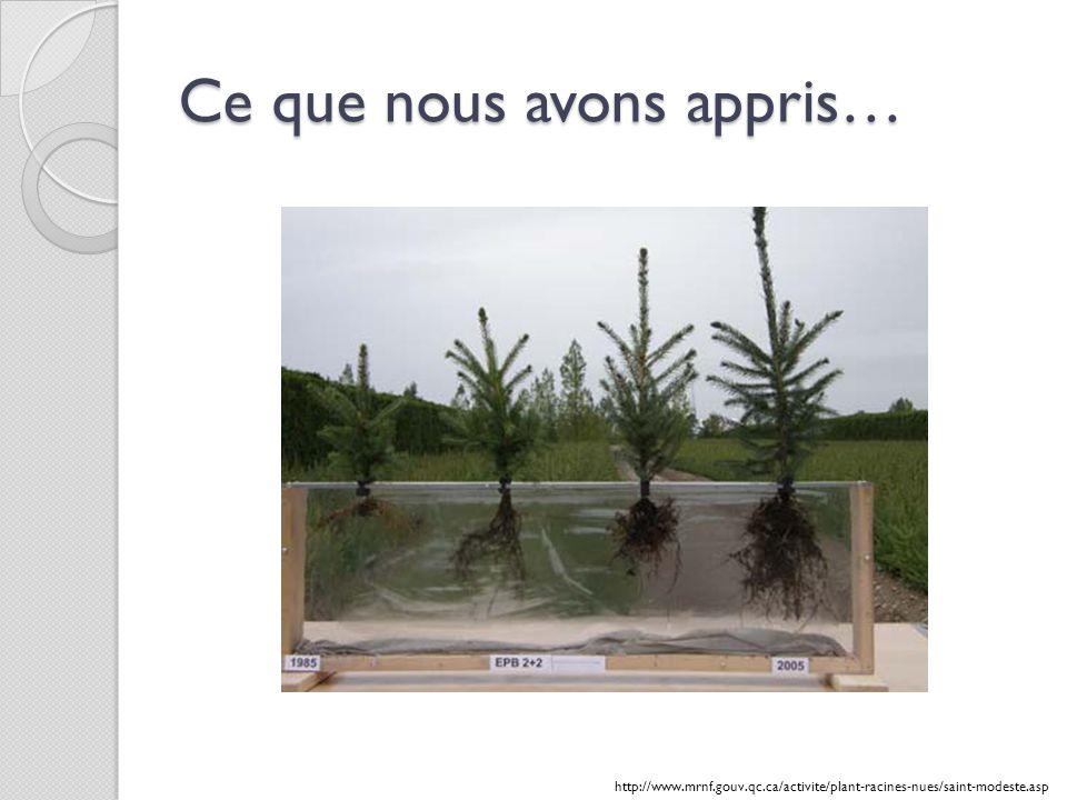 Ce que nous avons appris… http://www.mrnf.gouv.qc.ca/activite/plant-racines-nues/saint-modeste.asp