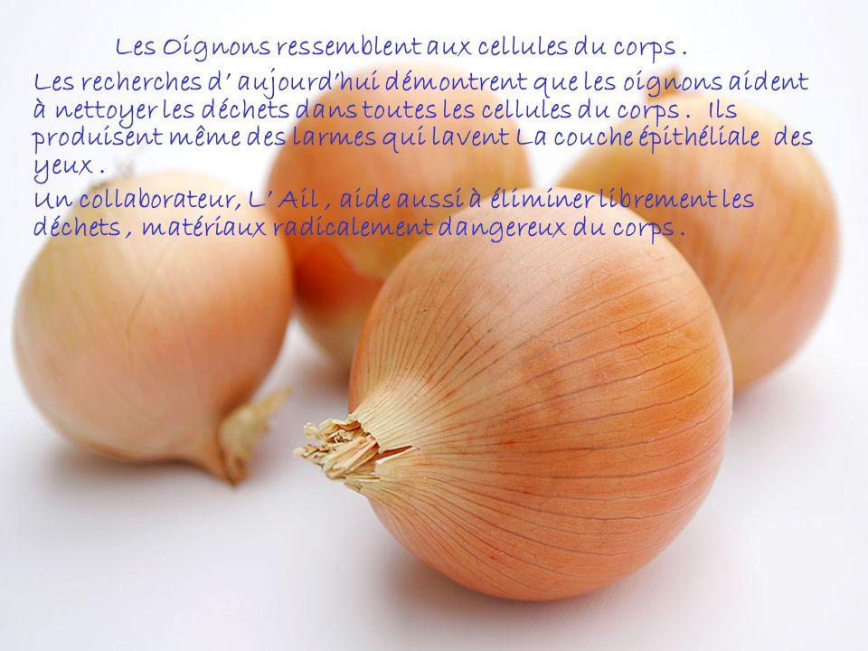 LOrange, les Pamplemousses et les autres Fruits Citriques ressemblent aux glandes des seins chez les femmes. Ils aident la santé des seins et le mouve