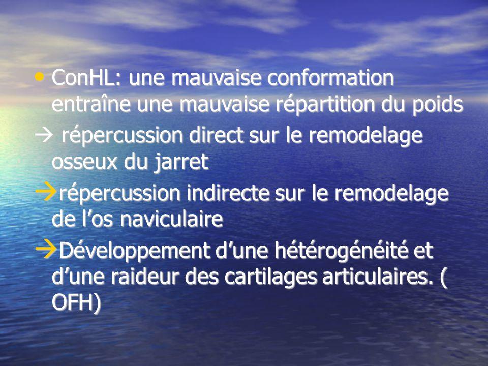 ConHL: une mauvaise conformation entraîne une mauvaise répartition du poids ConHL: une mauvaise conformation entraîne une mauvaise répartition du poids répercussion direct sur le remodelage osseux du jarret répercussion direct sur le remodelage osseux du jarret répercussion indirecte sur le remodelage de los naviculaire répercussion indirecte sur le remodelage de los naviculaire Développement dune hétérogénéité et dune raideur des cartilages articulaires.