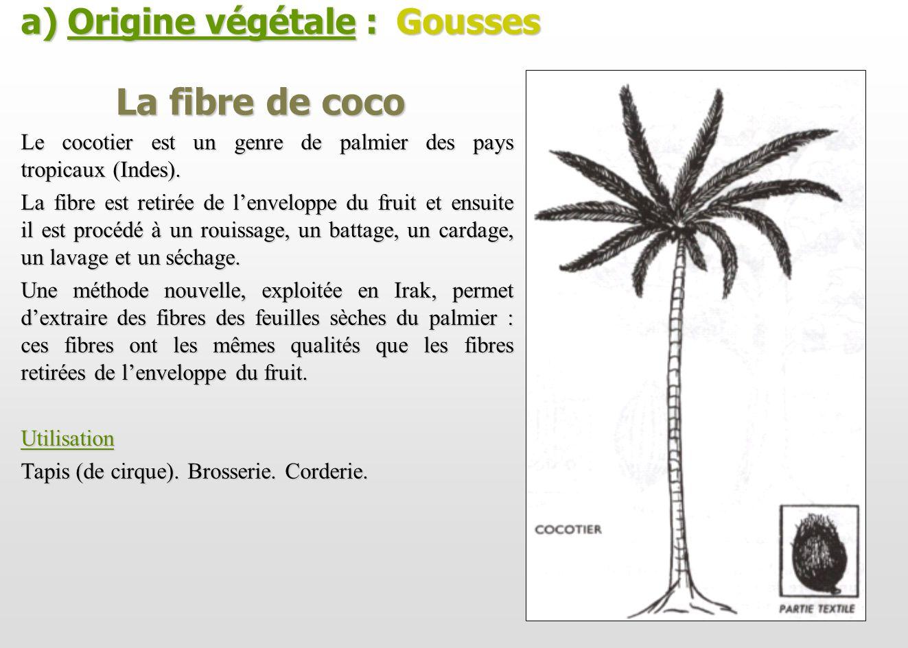 La fibre de coco Le cocotier est un genre de palmier des pays tropicaux (Indes). La fibre est retirée de lenveloppe du fruit et ensuite il est procédé