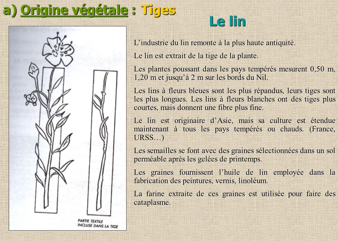 a) Origine végétale : Tiges Lindustrie du lin remonte à la plus haute antiquité. Le lin est extrait de la tige de la plante. Les plantes poussant dans
