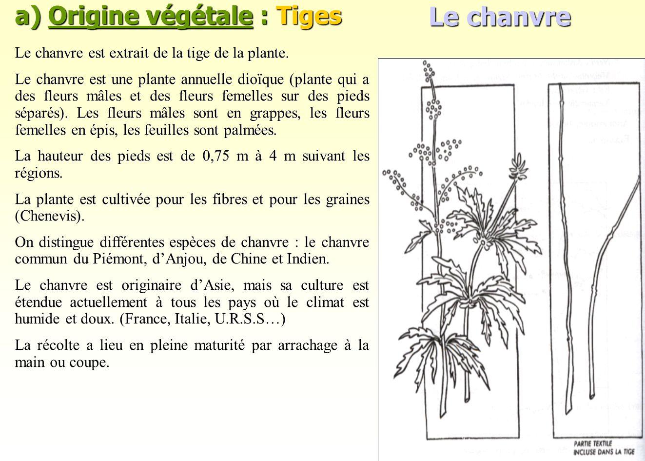 a) Origine végétale : Tiges Le chanvre est extrait de la tige de la plante. Le chanvre est une plante annuelle dioïque (plante qui a des fleurs mâles