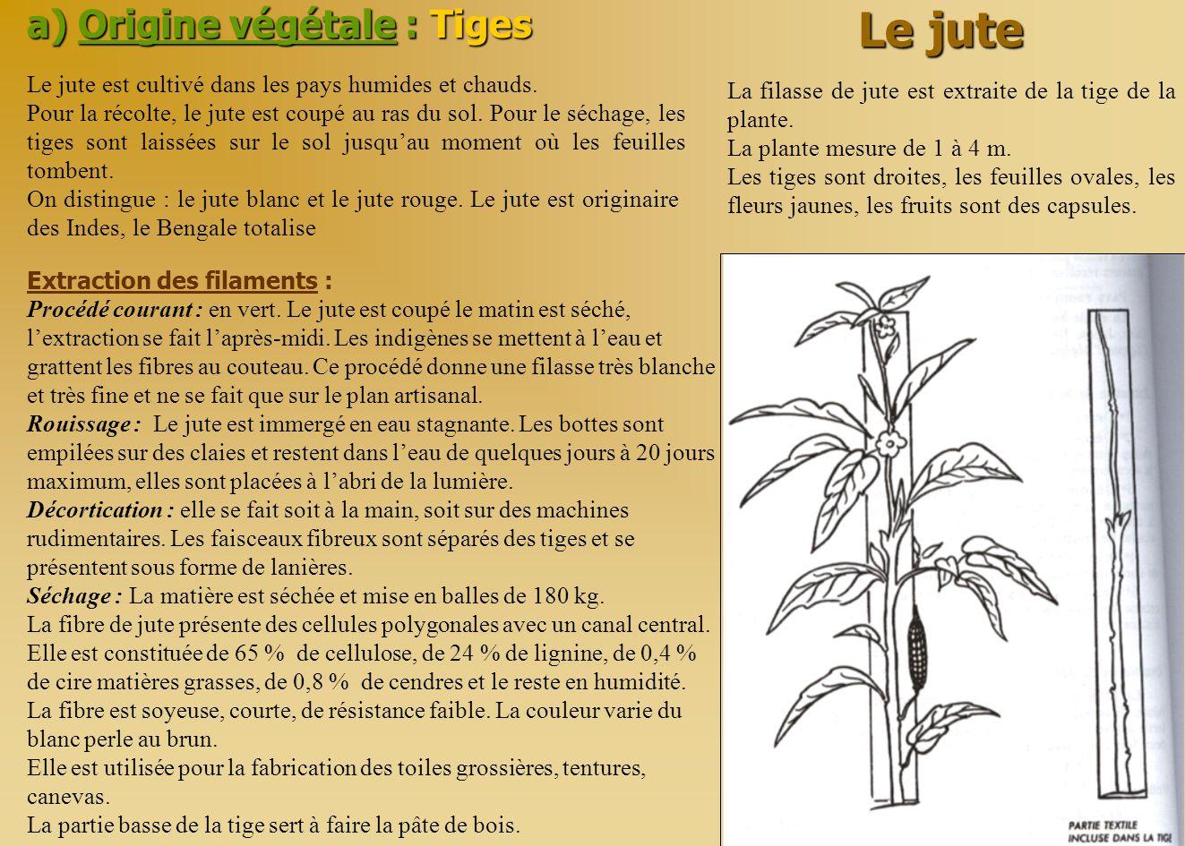 a) Origine végétale : Tiges Le jute La filasse de jute est extraite de la tige de la plante. La plante mesure de 1 à 4 m. Les tiges sont droites, les