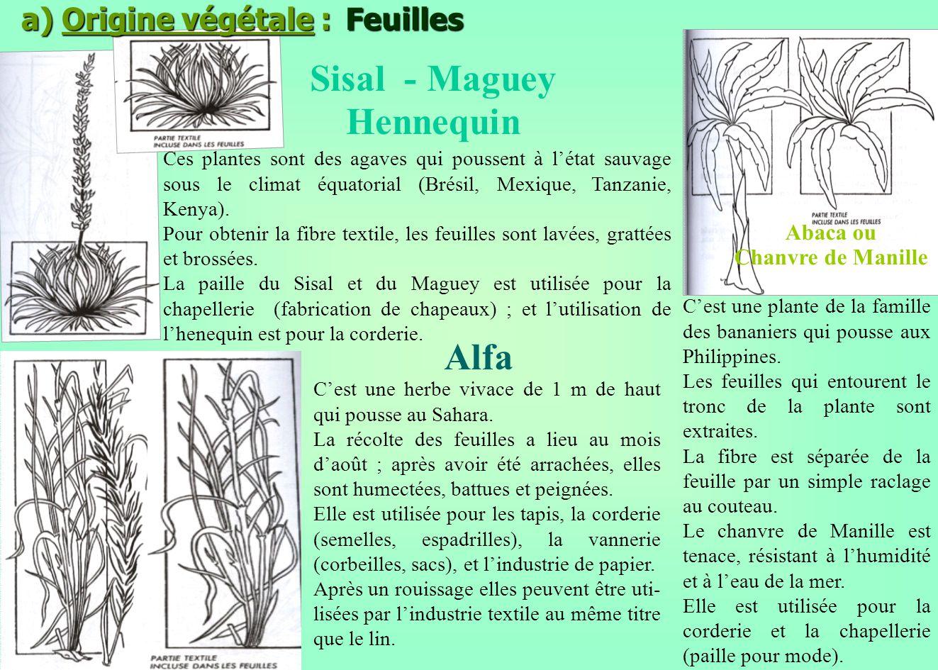 a) Origine végétale : Feuilles Sisal - Maguey Hennequin Ces plantes sont des agaves qui poussent à létat sauvage sous le climat équatorial (Brésil, Me