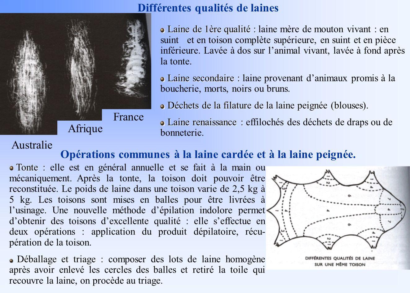 Australie Afrique France Différentes qualités de laines Laine de 1ère qualité : Laine de 1ère qualité : laine mère de mouton vivant : en suint et en t