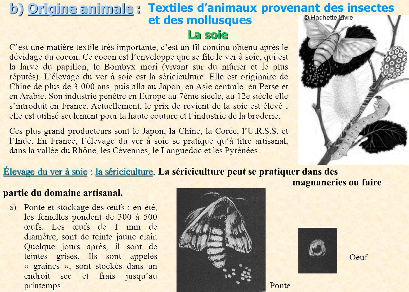 b) Origine animale : Textiles danimaux provenant des insectes et des mollusques La soie Cest une matière textile très importante, cest un fil continu