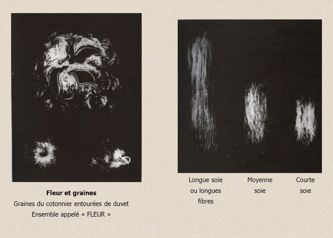 a) Origine végétale : Sève Caoutchouc Le fil de caoutchouc est produit par la sève de larbre, lhévéa ; cest un élastomère naturel.