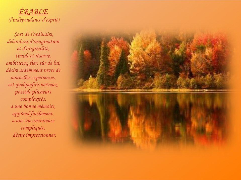 CYPRÈS (la fidélité) Fort, musclé, adaptable, prend ce que la vie a à offrir, content, optimiste, a soif d'argent et de reconnaissance, déteste la sol