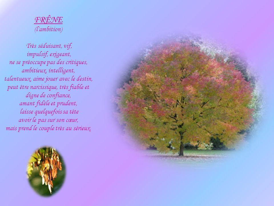 FIGUIER (la sensibilité) Très fort, un peu entêté, indépendant, ne tolère pas les contradictions ou les controverses, adore la vie, sa famille, les en