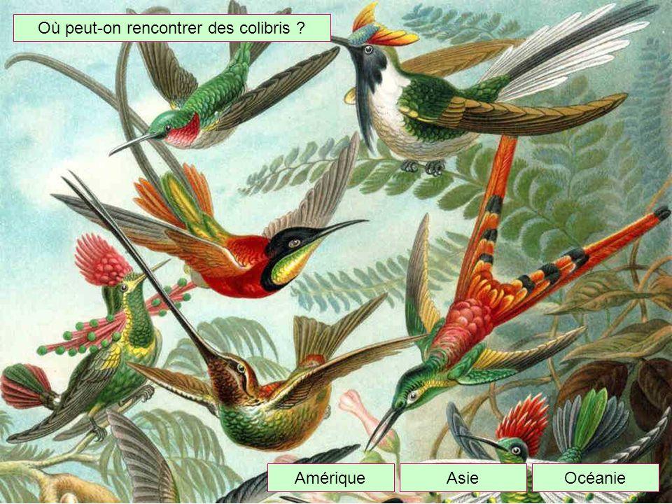 Où peut-on rencontrer des colibris ? OcéanieAmériqueAsie