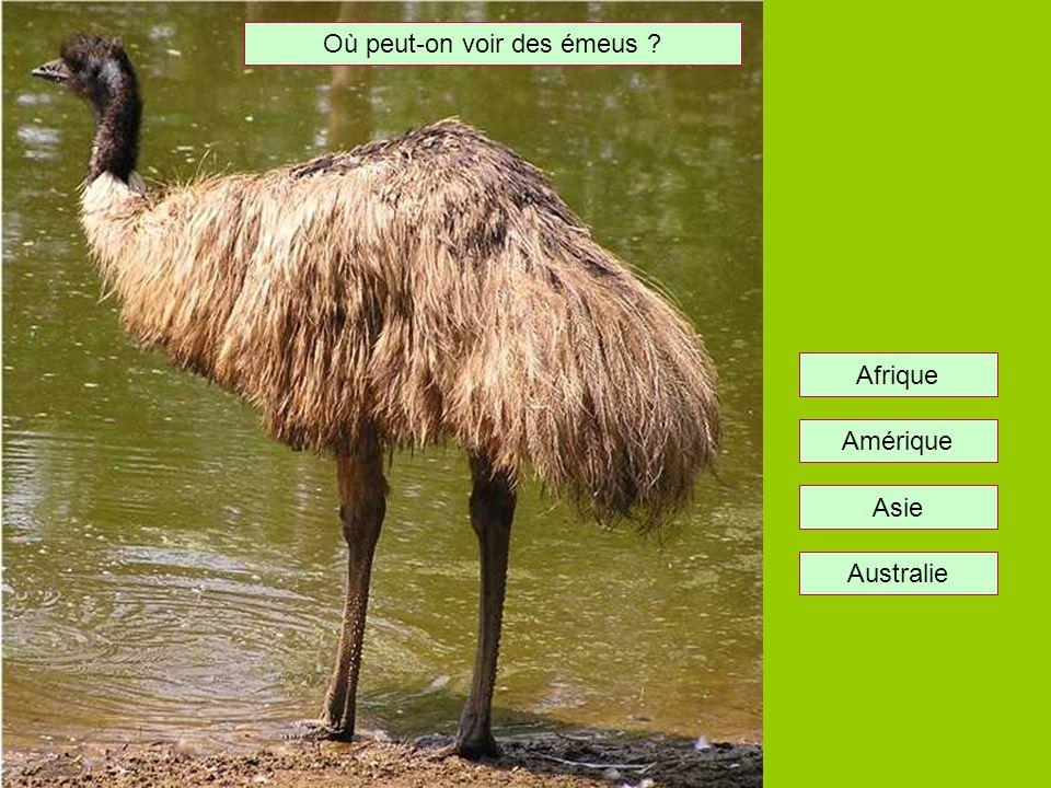 Où peut-on voir des autruches ? Asie Afrique Amérique Australie