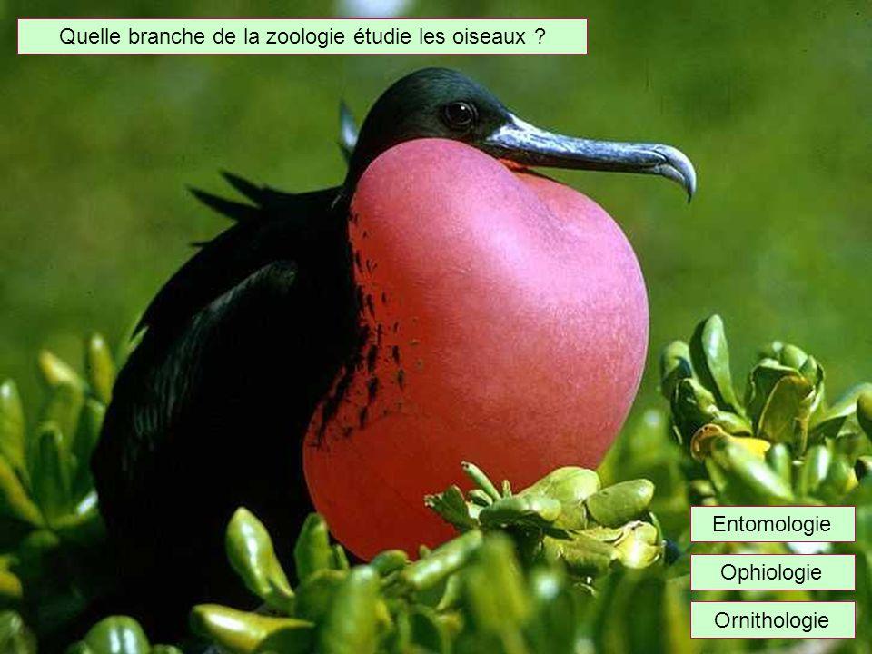 Quelle branche de la zoologie étudie les oiseaux ? Ophiologie Ornithologie Entomologie