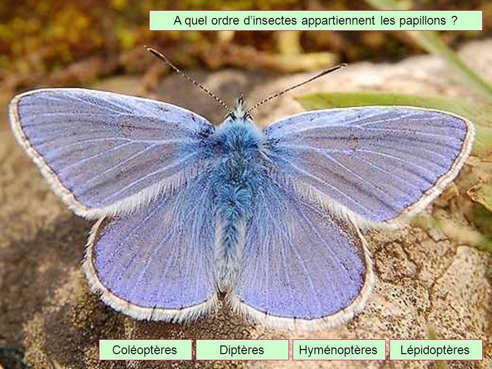 A quel ordre dinsectes appartiennent les papillons ? DiptèresLépidoptèresColéoptèresHyménoptères