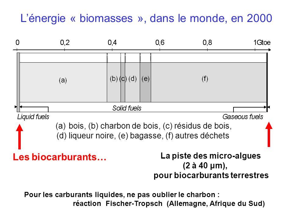 Lénergie « biomasses », dans le monde, en 2000 (a) bois, (b) charbon de bois, (c) résidus de bois, (d) liqueur noire, (e) bagasse, (f) autres déchets Les biocarburants… La piste des micro-algues (2 à 40 μm), pour biocarburants terrestres Pour les carburants liquides, ne pas oublier le charbon : réaction Fischer-Tropsch (Allemagne, Afrique du Sud)