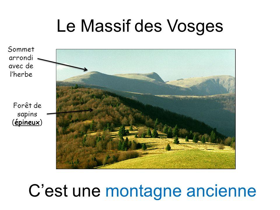 Le Massif des Vosges Sommet arrondi avec de lherbe Forêt de sapins (épineux) Cest une montagne ancienne