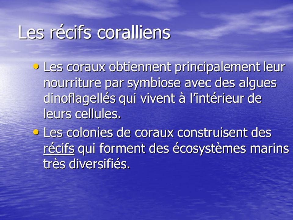 Les récifs coralliens Les coraux obtiennent principalement leur nourriture par symbiose avec des algues dinoflagellés qui vivent à lintérieur de leurs