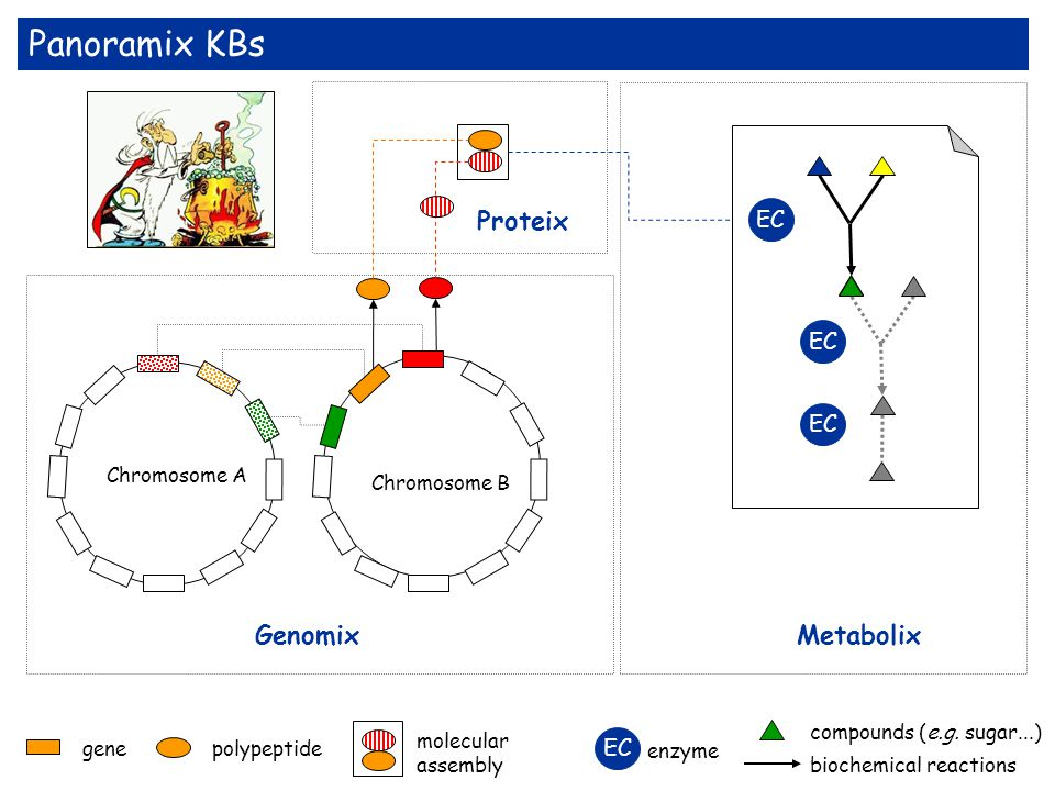 Panoramix KBs gene polypeptide Chromosome B Chromosome A biochemical reactions compounds (e.g. sugar...) molecular assembly EC Metabolix Proteix Genom