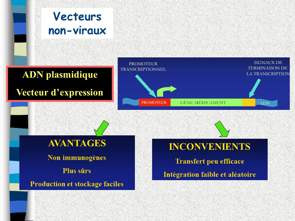 AVANTAGES Non immunogènes Plus sûrs Production et stockage faciles ADN plasmidique Vecteur dexpression INCONVENIENTS Transfert peu efficace Intégratio
