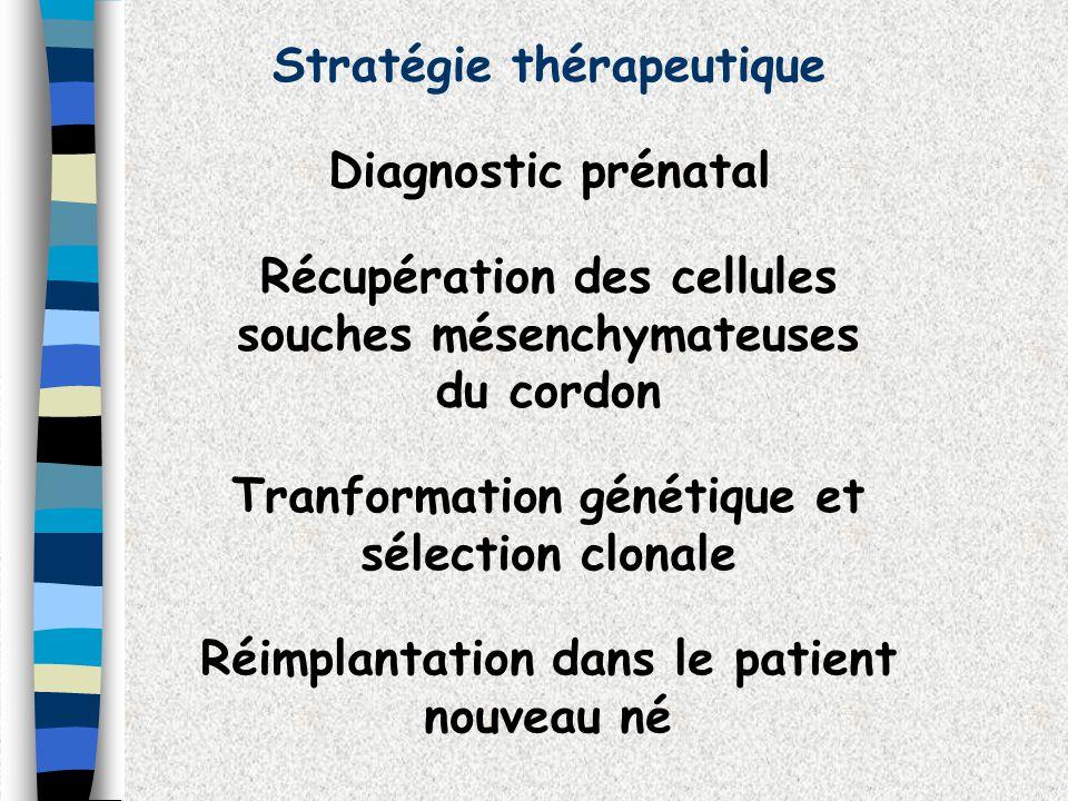 Stratégie thérapeutique Diagnostic prénatal Récupération des cellules souches mésenchymateuses du cordon Tranformation génétique et sélection clonale
