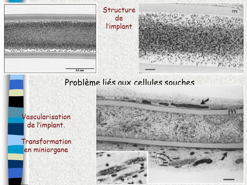 Problème liés aux cellules souches Structure de limplant Vascularisation de limplant. Transformation en miniorgane