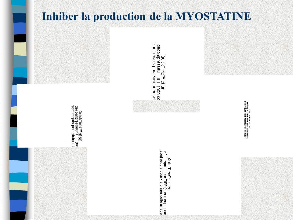 Inhiber la production de la MYOSTATINE