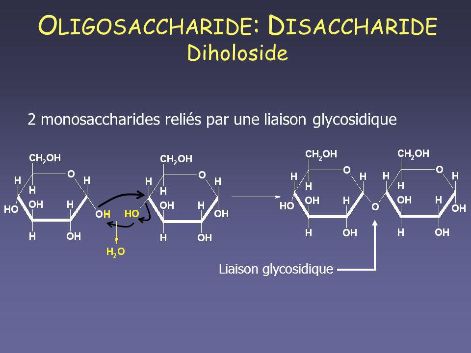 O LIGOSACCHARIDE : D ISACCHARIDE Diholoside 2 monosaccharides reliés par une liaison glycosidique Liaison glycosidique