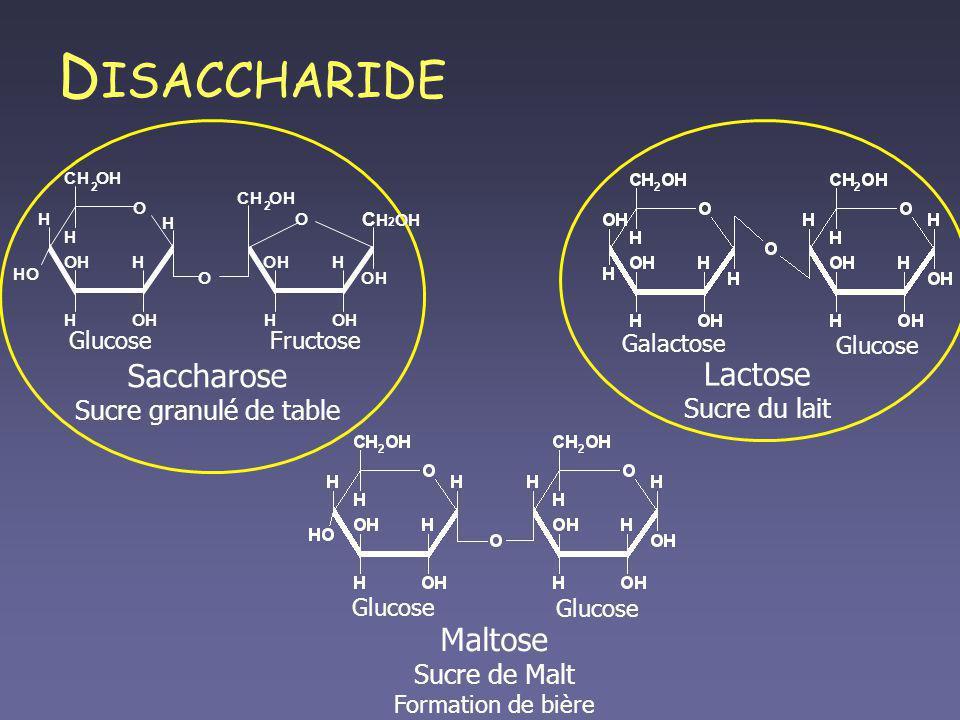 D ISACCHARIDE Maltose Sucre de Malt Formation de bière Glucose Lactose Sucre du lait Galactose Glucose Saccharose Sucre granulé de table GlucoseFructo