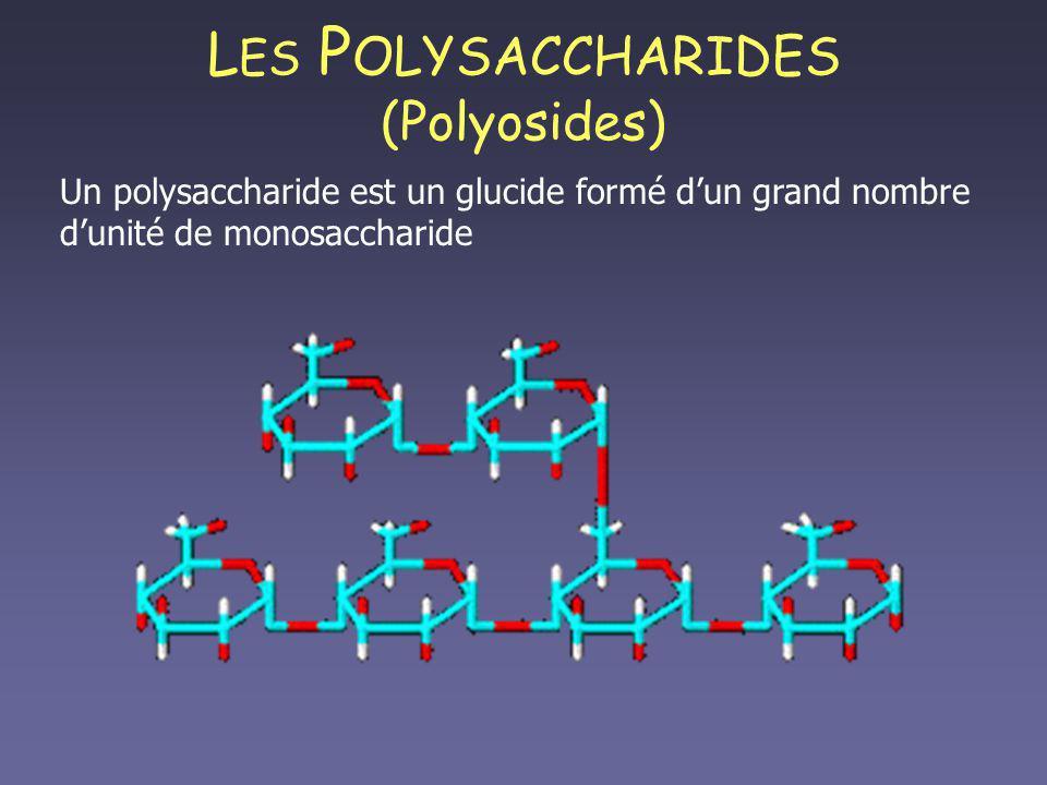 L ES P OLYSACCHARIDES (Polyosides) Un polysaccharide est un glucide formé dun grand nombre dunité de monosaccharide