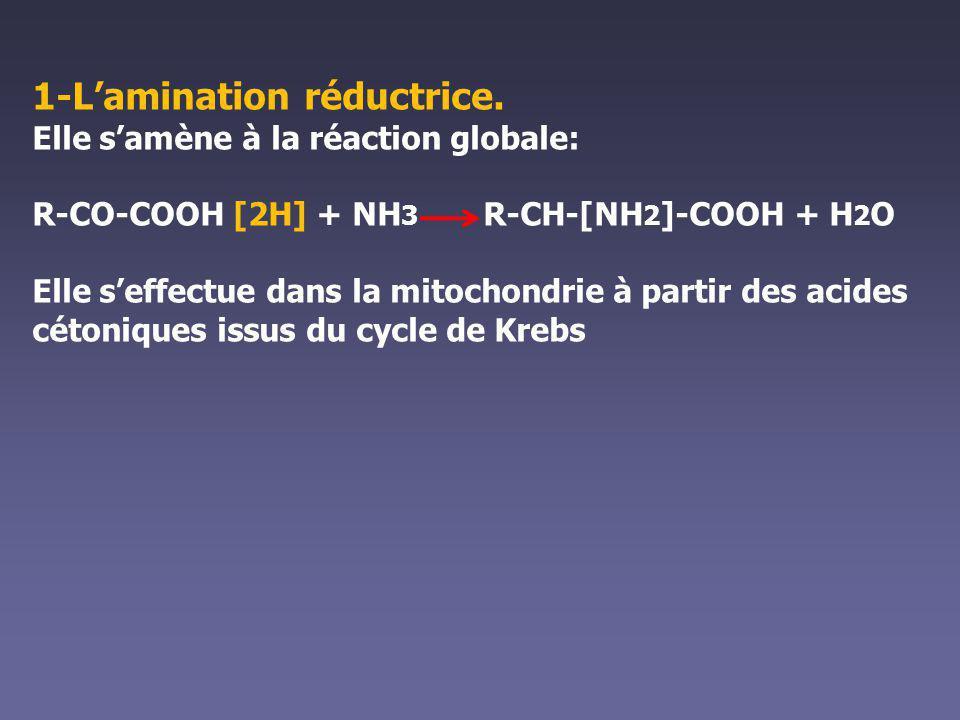 1-Lamination réductrice. Elle samène à la réaction globale: R-CO-COOH [2H] + NH 3 R-CH-[NH 2 ]-COOH + H 2 O Elle seffectue dans la mitochondrie à part